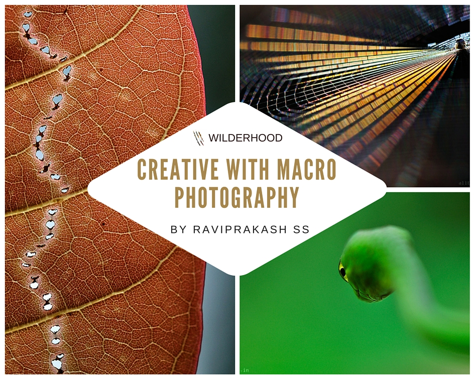 'Creative with Macro Photography' by RaviPrakash SS, creative nature photographer and wildlife photographer of the year 2014